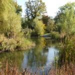 étang des Jardins du Nant