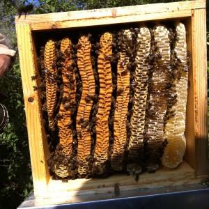 Le mystère de la ruche Warré élucidé !